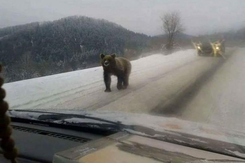 Medvjed šetao putem po Grmeču