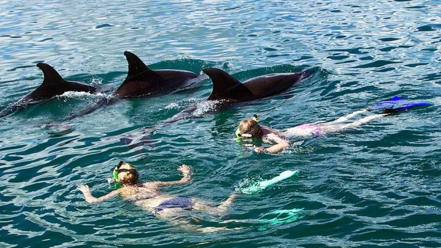 Zabrana plivanja sa delfinima na Novom Zelandu